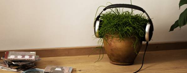 musique-plante1