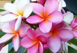 beach-beach-flower-beautiful-flowers-1056165